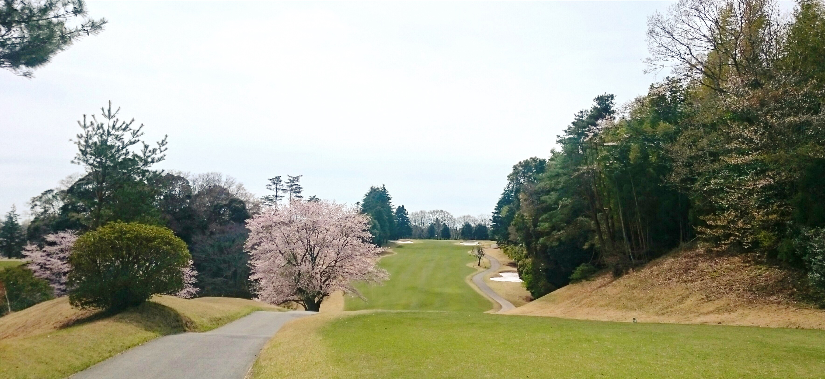 満開の桜に向けてティーショット!