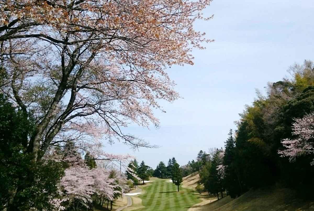 桜がきれいなゴルフ場です。